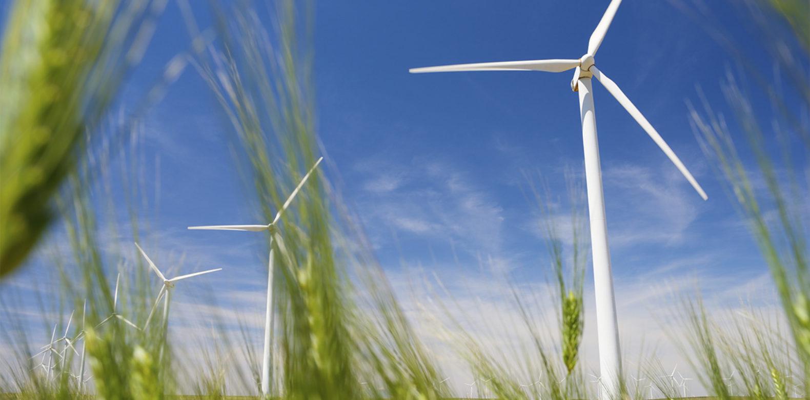 Avis sur le rapport en matière de développement durable de la Région Grand Est