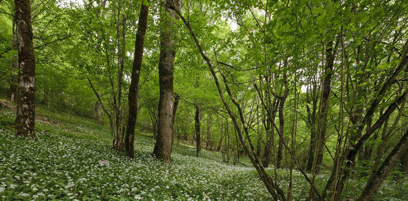 Avis sur le projet de création du Parc national des forêts de Champagne et Bourgogne